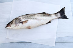 Striped Bass. Freshly caught striped bass being prepared for dinner Stock Photos