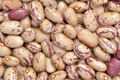 Striped beans Royalty Free Stock Images