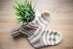 Striped beige-white knitted socks and a green plant in the pot Stock Photography