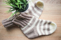Striped beige-white knitted socks and a green plant in the pot Stock Photos