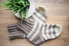Striped beige-white knitted socks and a green plant in the pot Royalty Free Stock Photos