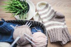 Striped beige-white knitted socks and a green plant in the pot Royalty Free Stock Photo