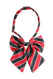 Striped bow tie for women Stock Images