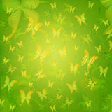 Striped butterflies in green old paper background Stock Images