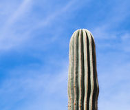 Striped Cactus and blue sky Stock Photo