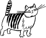 Striped Cat Stock Image