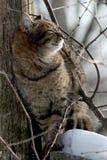 Striped cat. Beautiful cat, cat bask in the sun, baleen carnivores, pet, cat, predator, tabby cat, cat in a tree royalty free stock photo