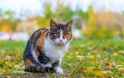 Striped cat in city park. Stock Image