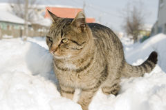 Striped cat climbed on a heap of snow. In the street stock image