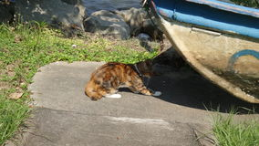 Striped cat crouching ready to catch a bird under a boat Royalty Free Stock Photos