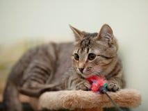 Striped cat. Stock Photos