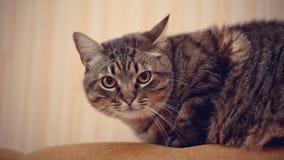 Striped cat. Stock Image
