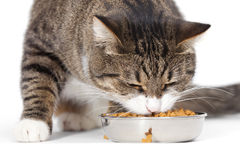 Striped cat eats a dry feed. The striped cat eats a dry feed, is isolated on a white background Royalty Free Stock Images
