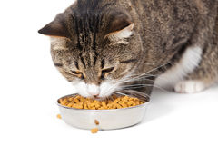 Striped cat eats a dry feed. The striped cat eats a dry feed, is isolated on a white background Stock Photo