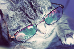 Striped Cat in Eyeglasses Stock Photos