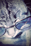 Striped Cat in Eyeglasses Royalty Free Stock Photos