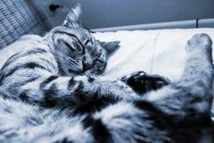 Striped cat fast asleep (monochrome ) Stock Photo