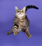 Striped cat jumping on lilac Stock Photography