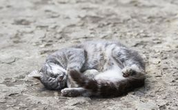Funny striped cat lies sleeping sweetly wool in the yard in the Royalty Free Stock Photos
