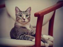 Striped cat lies Stock Photos