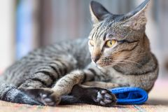 Striped cat lying down on the mat. Pet at home stock photography