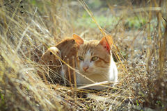 Striped cat. In the meadow royalty free stock images