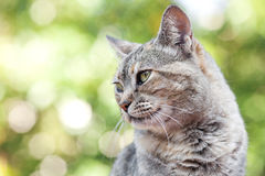 Striped cat outdoor Stock Photo
