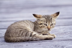 Striped cat outside Stock Image