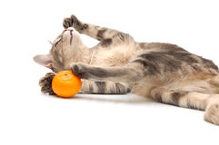 Striped cat plays with mangerine Royalty Free Stock Photo