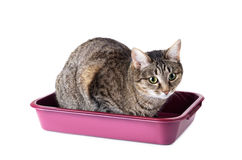 Striped cat sitting in cat toilet. Isolated on a white background Stock Photography