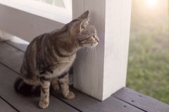 Cat sitting on the porch. Striped cat sitting on the porch stock photography