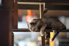 Striped cat sleeping or dreaming Royalty Free Stock Images
