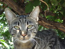 Striped cat in a tree Stock Image