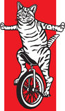 Striped Cat on a Unicycle Royalty Free Stock Photography