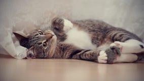 Striped cat Stock Image