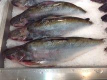Striped catfish Stock Photography