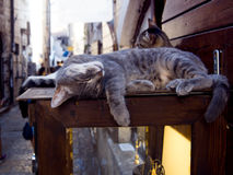 Striped Cats Are Sleeping On Storefront, Tourist Place Royalty Free Stock Image