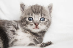 Striped cats child looking at the camera Royalty Free Stock Photography