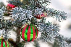 Striped Christmas ball on a snow-covered tree branch Royalty Free Stock Photography