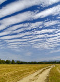 Striped clouds over the cleaned wheaten field Royalty Free Stock Photo