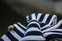 Striped Colorado beetle on a textile striped bow royalty free stock image