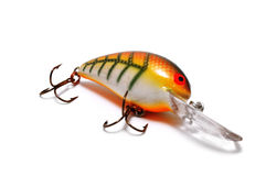 Striped Crankbait with Orange Belly Stock Photography