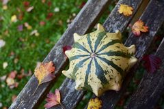 Striped Crown of Thorns ornamental gourd among fall leaves. On a rustic wooden garden bench with copy space Royalty Free Stock Photography