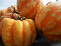 Striped Decorative Pumpkin Squash. Closeup of striped orange and yellow decorative pumpkin squash royalty free stock photos