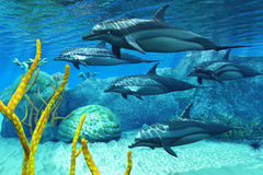 Striped Dolphins Stock Images