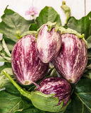 Striped eggplant bunch on green leaves Royalty Free Stock Photography