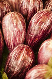Striped eggplants on display Royalty Free Stock Images