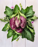 Striped eggplants with leaves and flowers on white wooden table Stock Photos