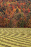 Striped field Royalty Free Stock Photography