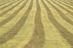 Striped field Stock Photos